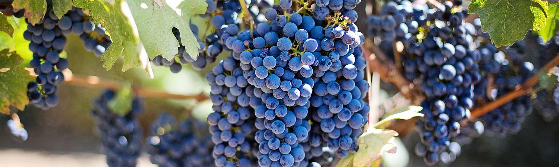 The Best Winery in Kamloops