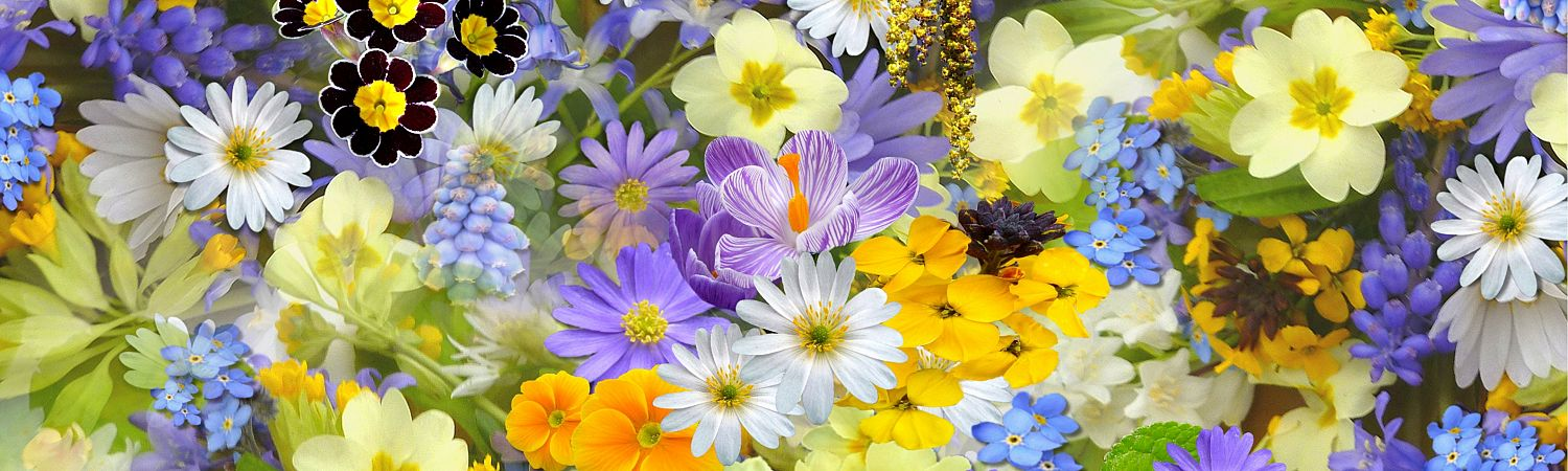 The Best Florist or Place To Get Flowers in Kelowna