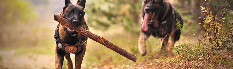 The Best Dog Park in Kelowna