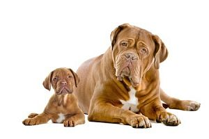 Sandy's Dog Training Service