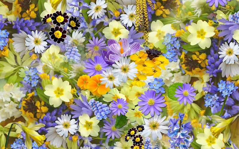 The Best Florist or Place To Get Flowers in Penticton