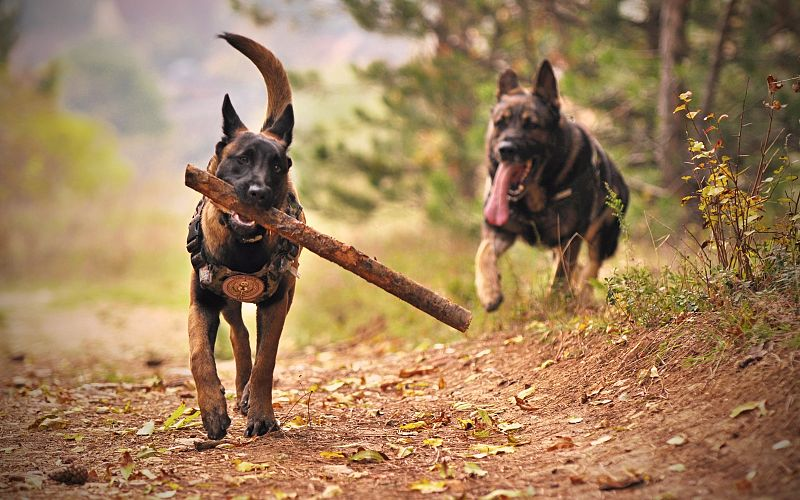 The Best Dog Park in Kamloops