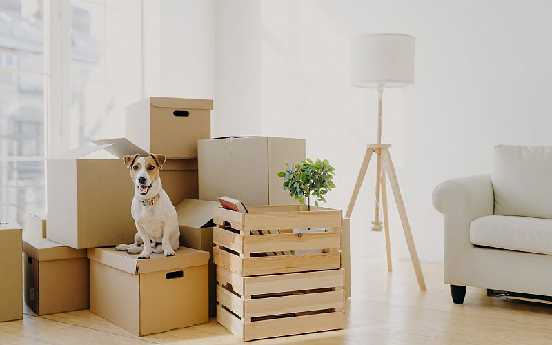 The Best Moving and Storage Company in Kamloops